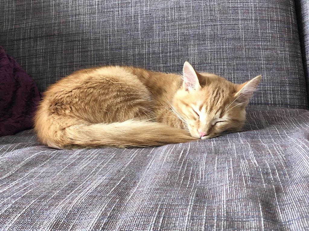 Gato Mani dormido en el sofa