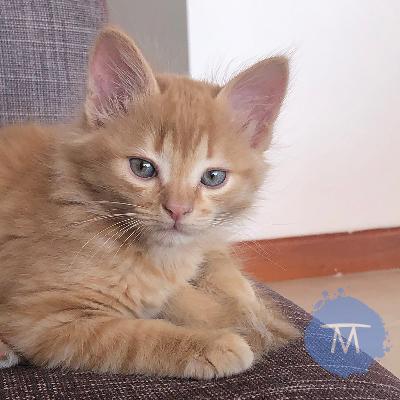 La llegada de nuestro gato Maní